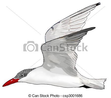 Tern clipart #8