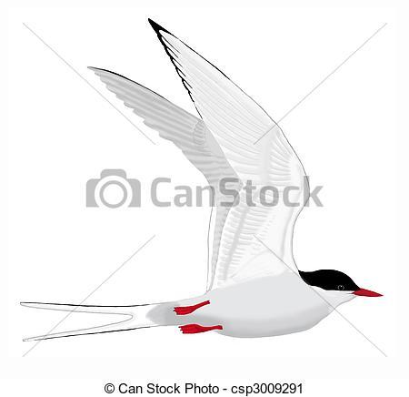 Tern clipart #14