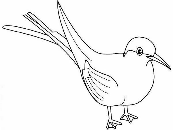 Tern clipart #13