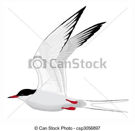Tern clipart #3