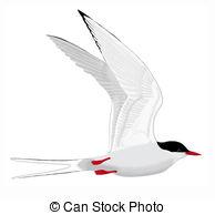 Tern clipart #6