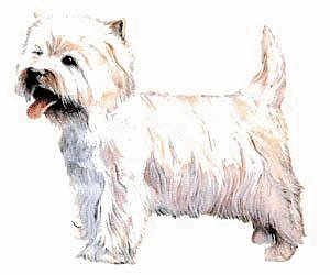 West Highland White Terrier clipart  terrier terrier West Clipart