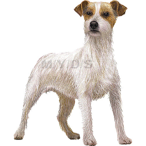 Terrier clipart Russell Terrier drawings Russell clipart