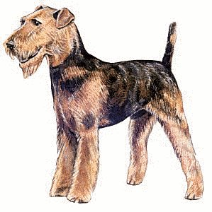 Terrier clipart Graphics Free Free Airedale Clipart