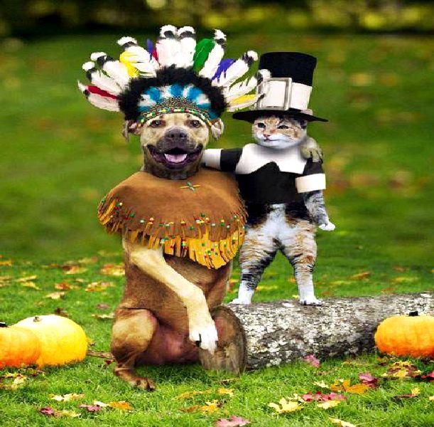 Thanksgiving clipart cat Clip Clip Dog Download Clipart