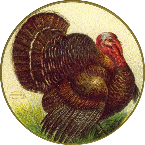 Cornucopia clipart vintage Clipart turkey Art in Thanksgiving