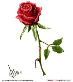 Drawn rose blood dripping Rose thorns One opposite has