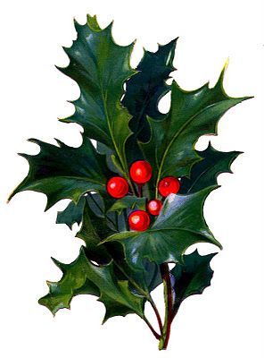 Thorns clipart victorian Red Berries Holly Bright Clip