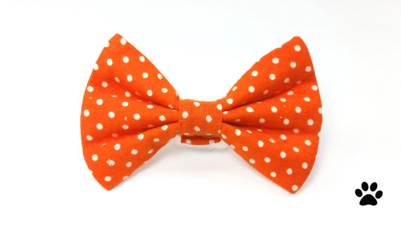Tie clipart orange Dog bow tie cat tie
