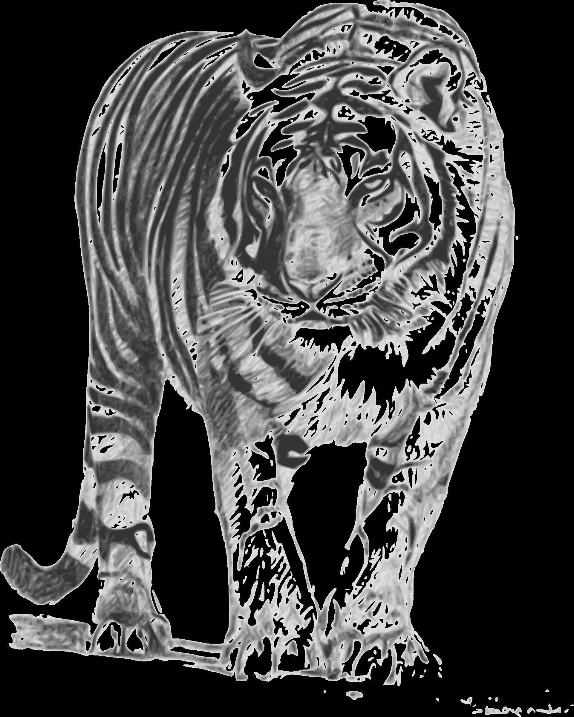 Big Cat clipart bengal tiger Bengal Tiger Clipart Tiger Bengal