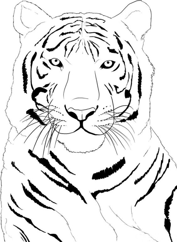 Tiiger clipart coloring book #14