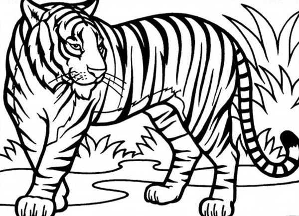 Tiiger clipart coloring book #6