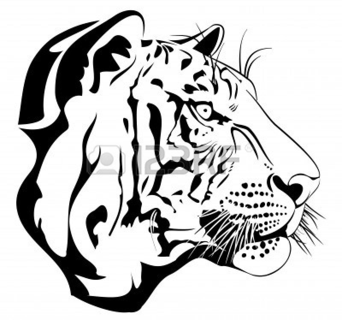 White Tiger clipart bengal tiger Tiger tiger%20eyes%20clip%20art Drawing Free Images