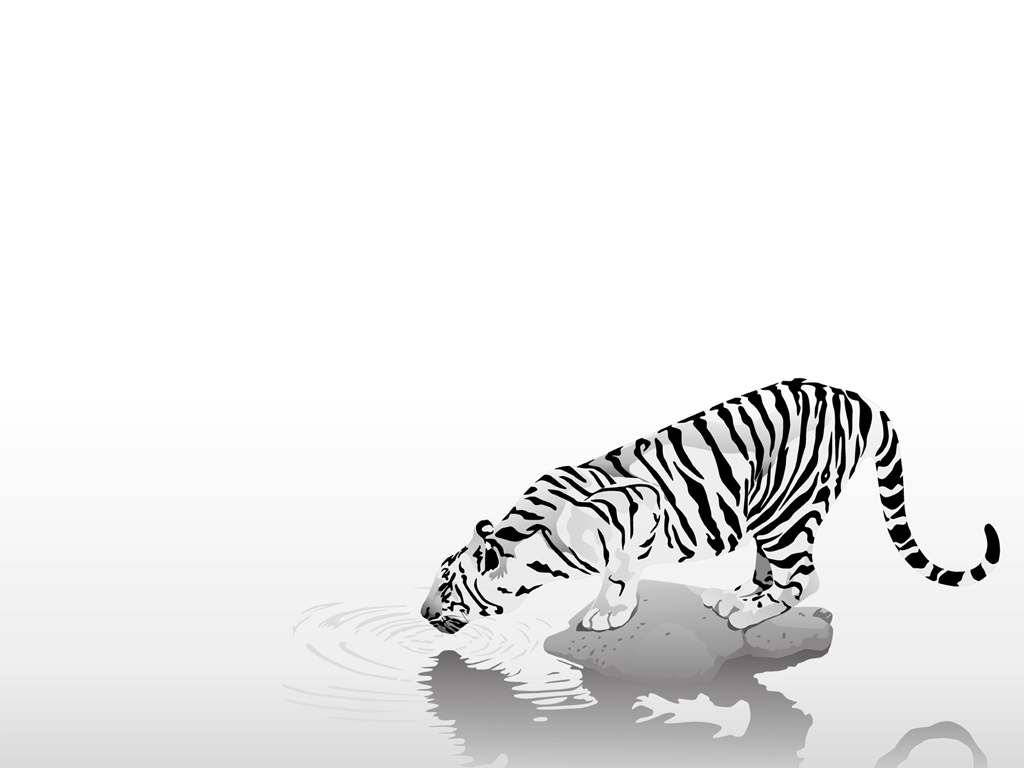 Tiiger clipart drinking #1