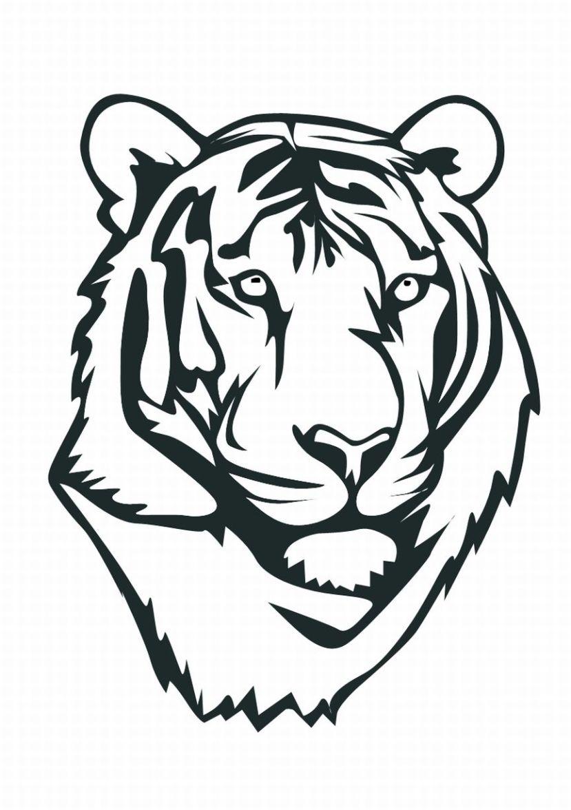 Tigres clipart drawn #1