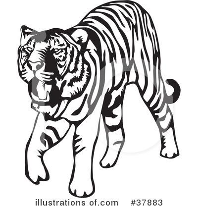 Tiger clipart illustration #4