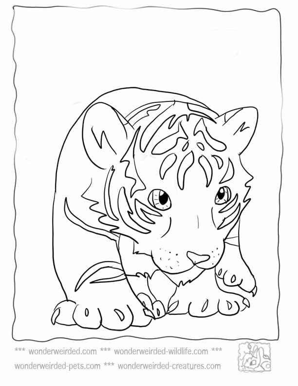 Tiger clipart mother and baby #10