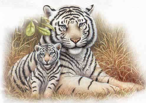 Tiger clipart mother and baby #12