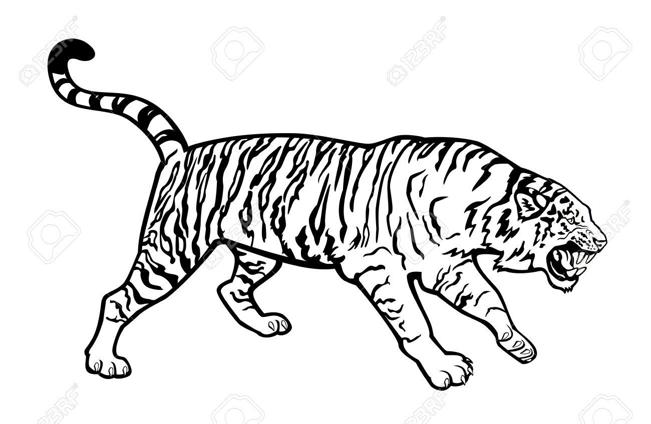 Tiger clipart siberian tiger #7