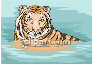 Tiger clipart swimming #13