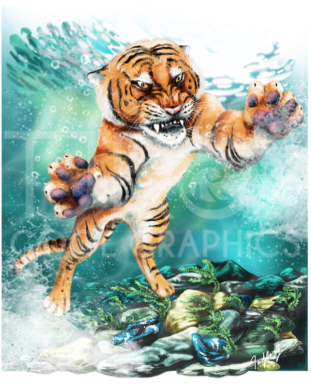Tiiger clipart swimming #11