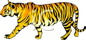 Tiger clipart yellow #15