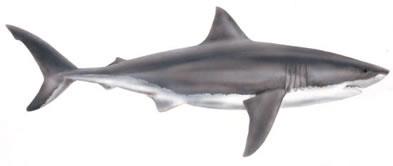 Tiger Shark clipart Tiger art clip image free