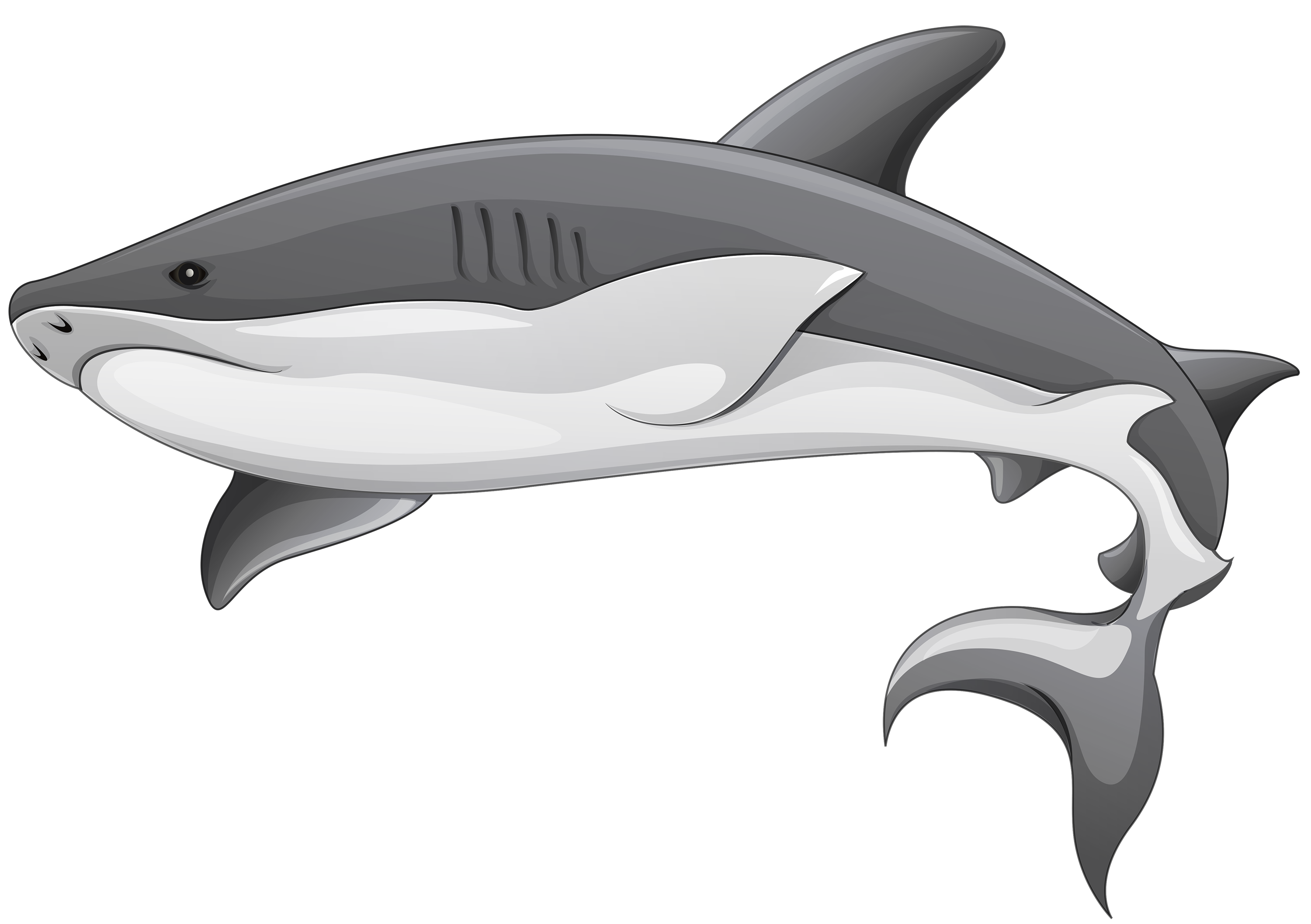 Tiger Shark clipart #15