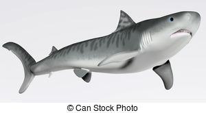 Tiger Shark clipart Shark Tiger Shark Tiger Clipart