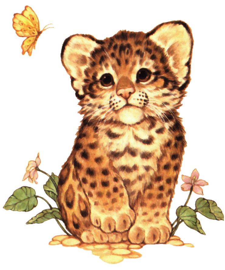 Tigres clipart baby cheetah #12