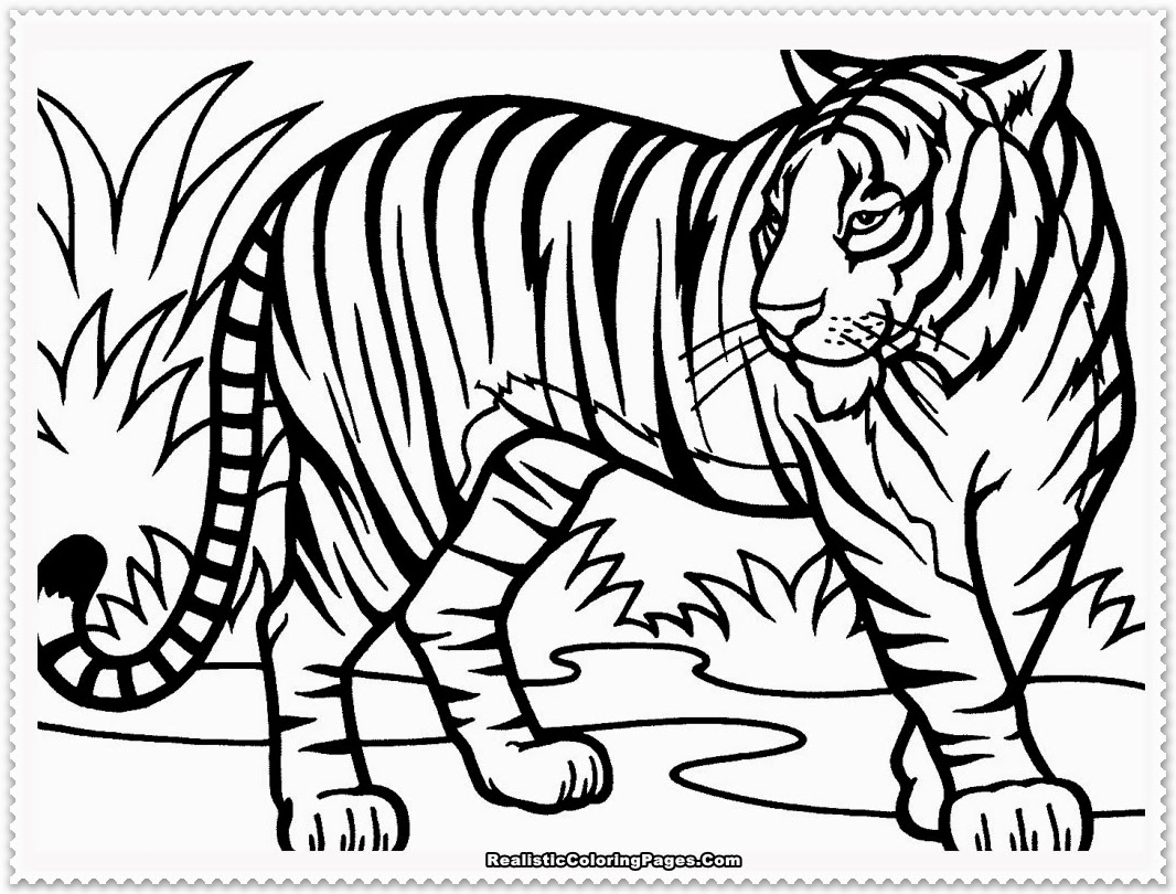 White Tiger clipart bengal tiger Coloring tiger 01 page Projects