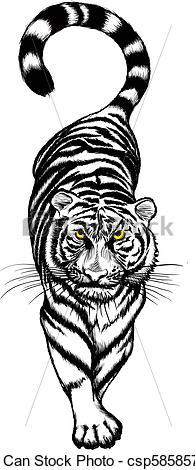 Tigres clipart drawn #6