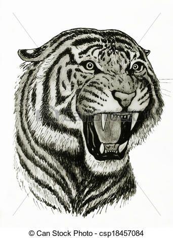 Tigres clipart drawn #7