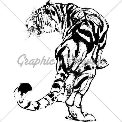 Tigres clipart drawn #12