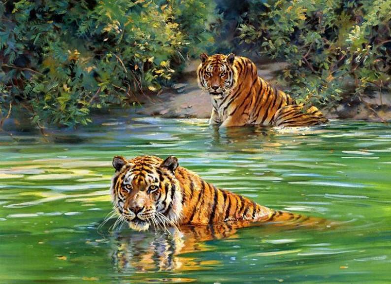 Tigres clipart swimming #13