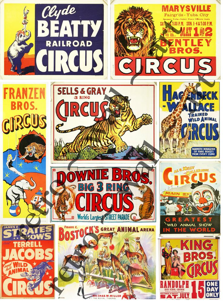 Carneval clipart tiger Paper Posters: Clip Photo Circus