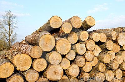 Timber clipart Clipart Lumber Cliparts Timber Cliparts