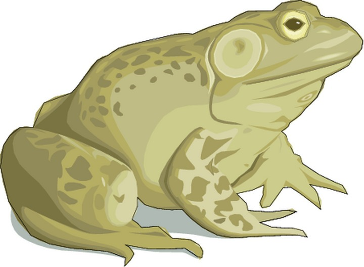 Toad clipart The Clipart Cliparts Clipart Toad