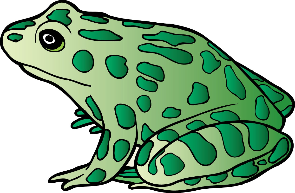 Toad clipart frog dissection #9