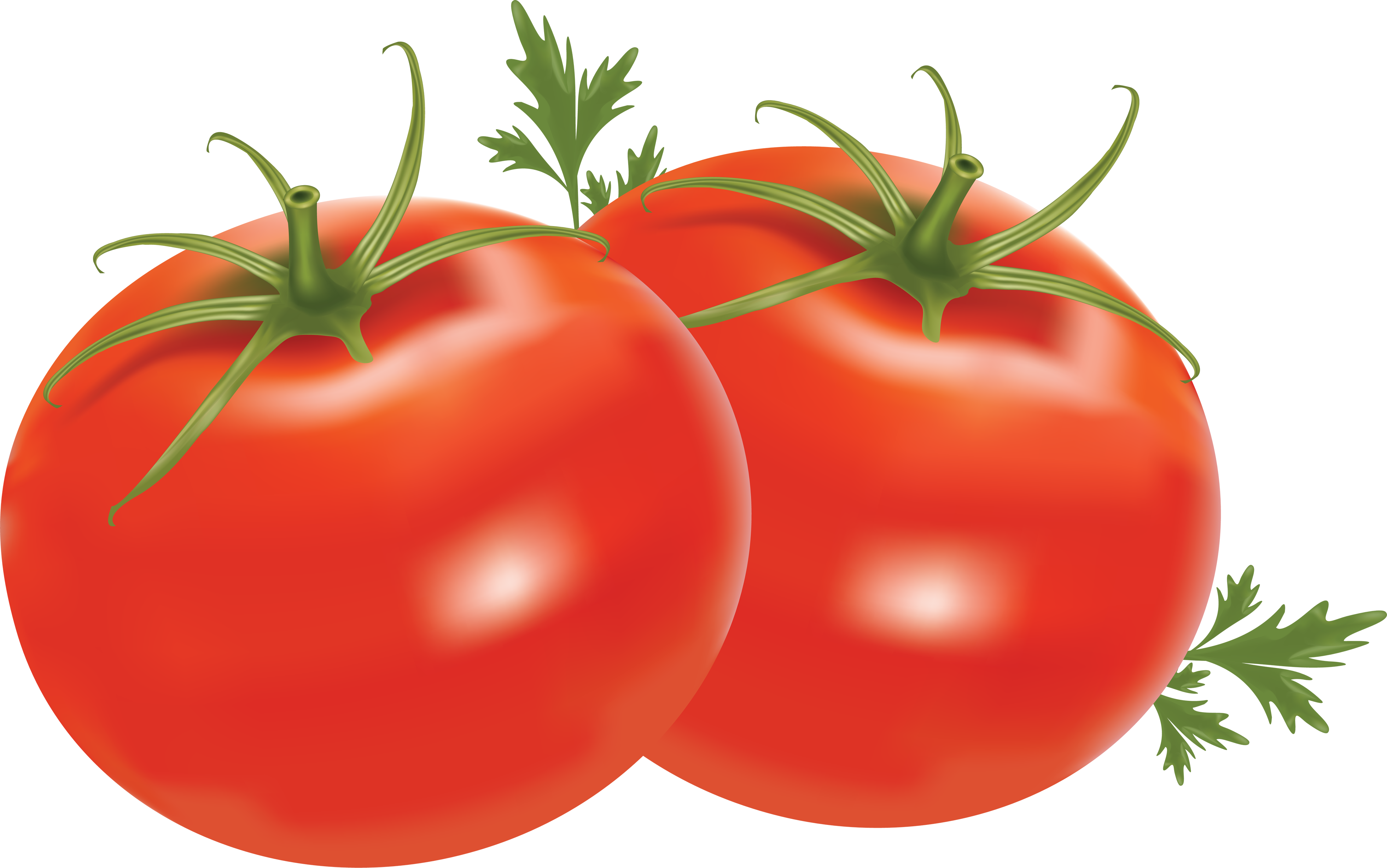 Red clipart tomato #15