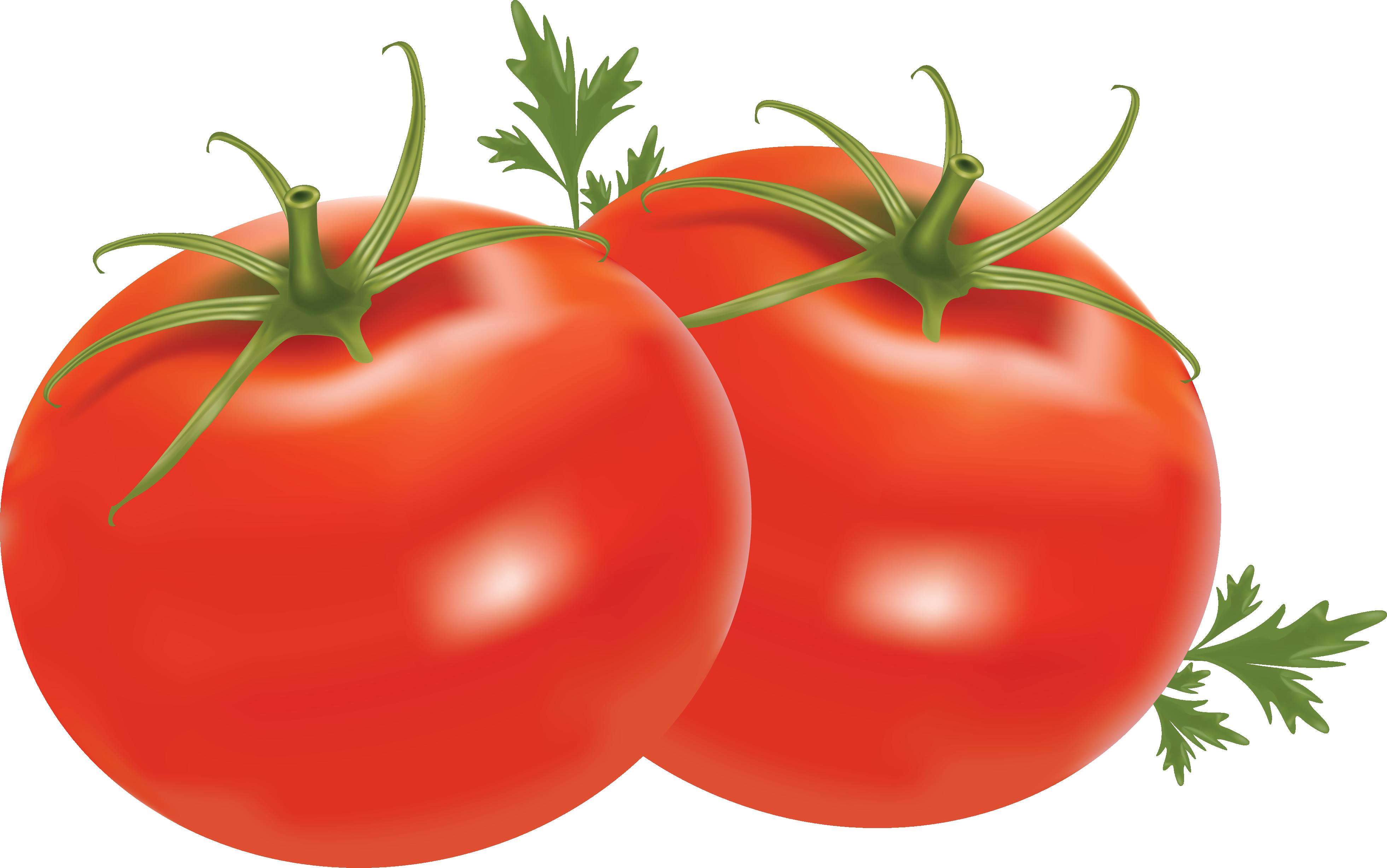 Vegetable clipart tomatoe #17615 Picture Tomato Tomato Clipart