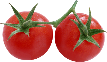 Tomato clipart two By Stock Isolated Gallery Tomatoes