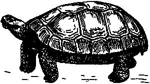 Turtoise clipart Clipart tortoise Tortoise Download Clip