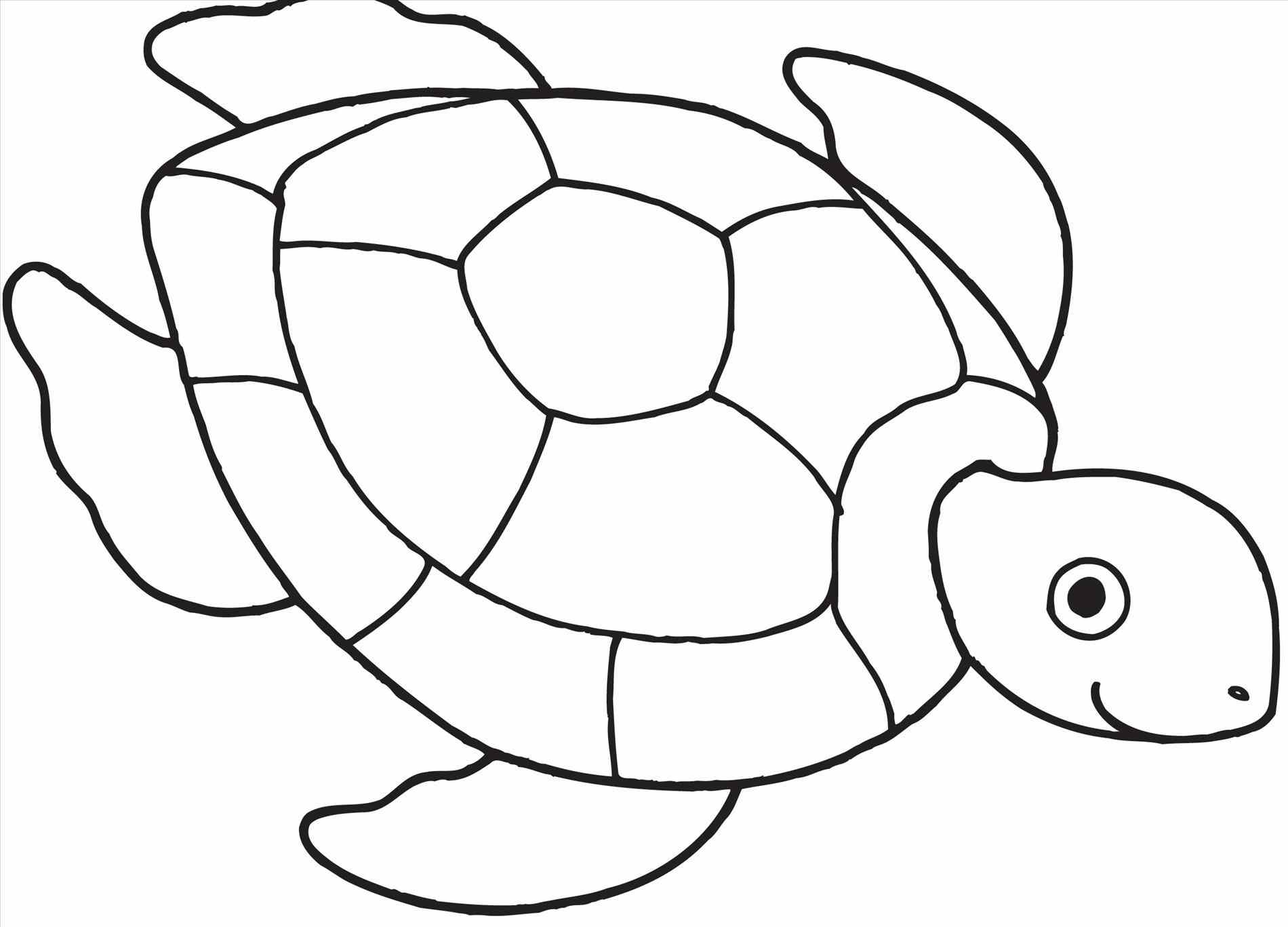 Tortoise clipart coloring page #12