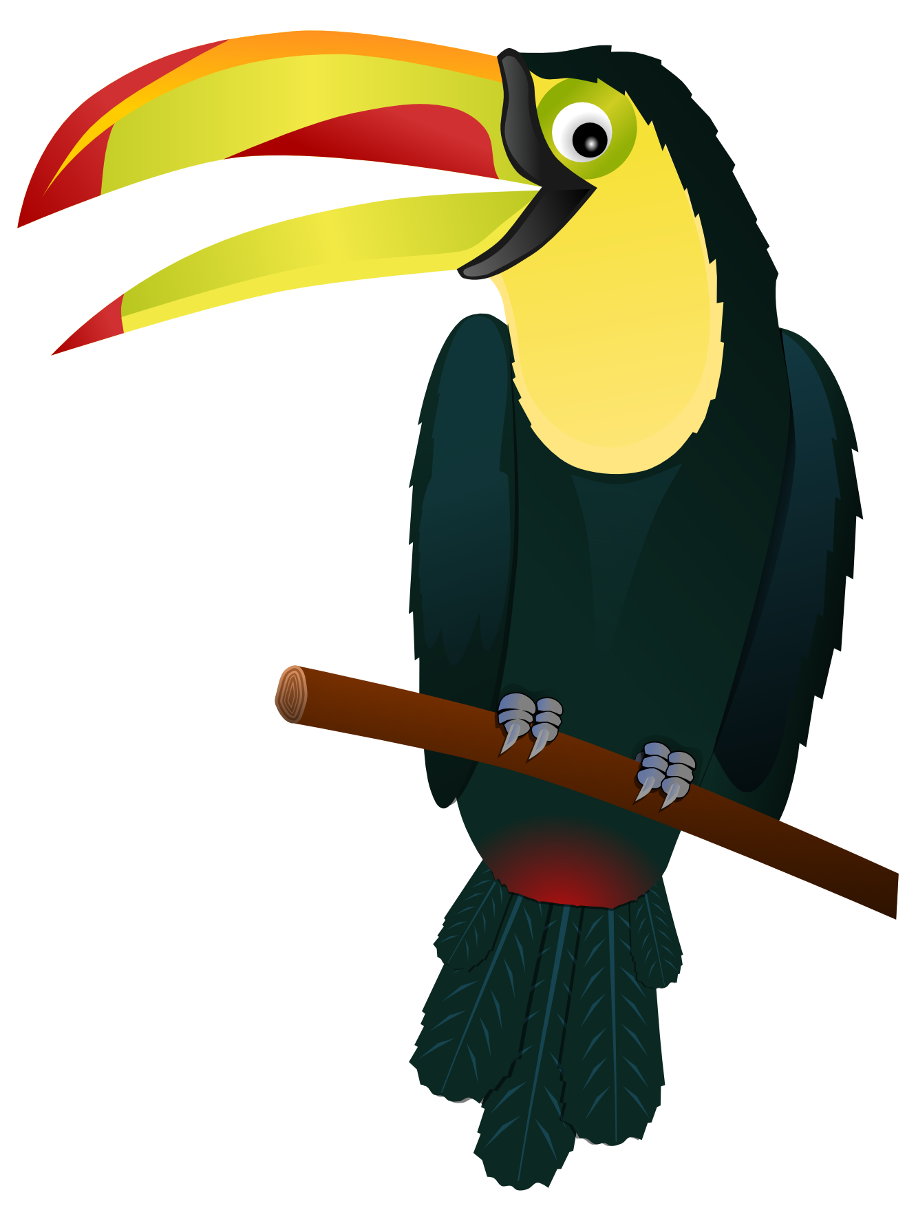Toucan clipart Images And Black Toucan White