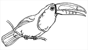 Toucan clipart black and white #6