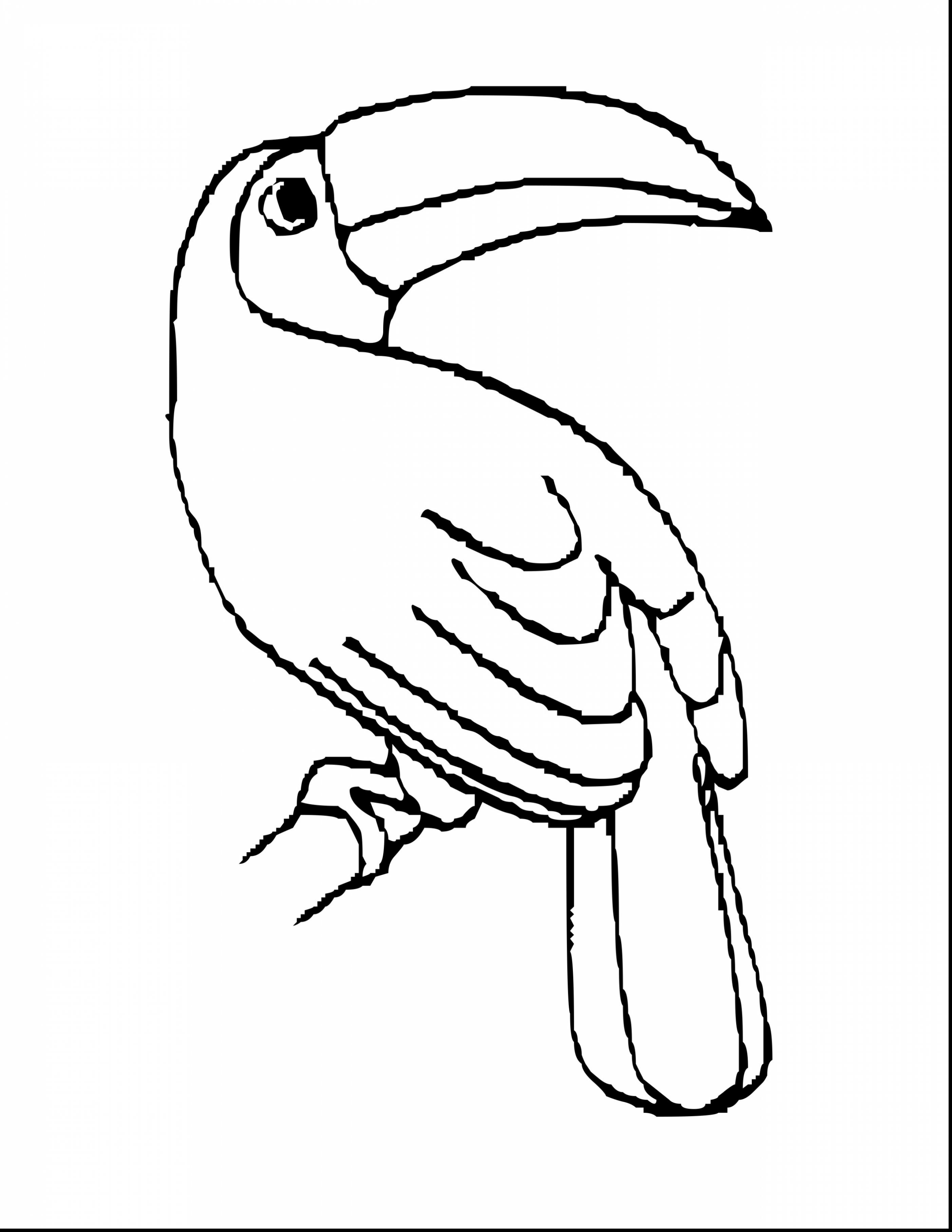 Toucan clipart black and white #15