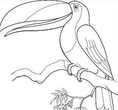 Toucan clipart black and white #7