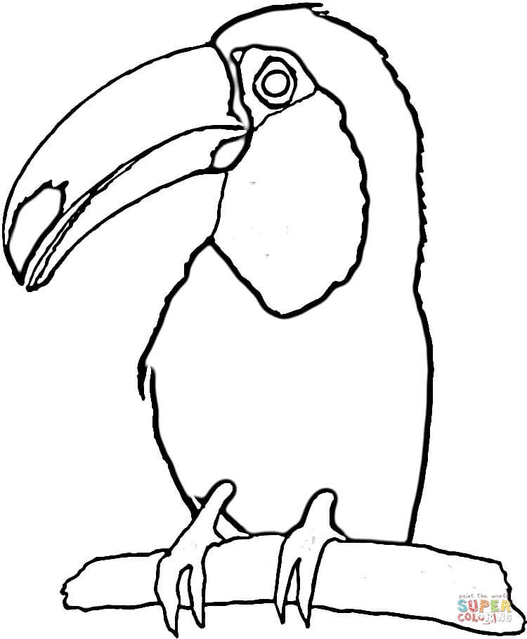 Toucanet clipart black and white #15