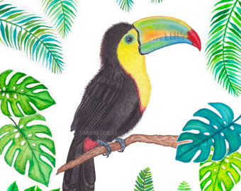 Toucan clipart costa rica #9